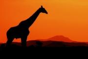 Farverike Afrika