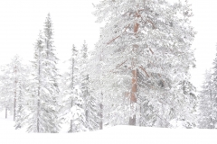 Bilde 15 - Ingen ting saa stille som sne