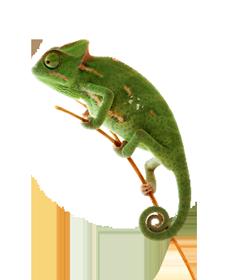 reptiles_hero